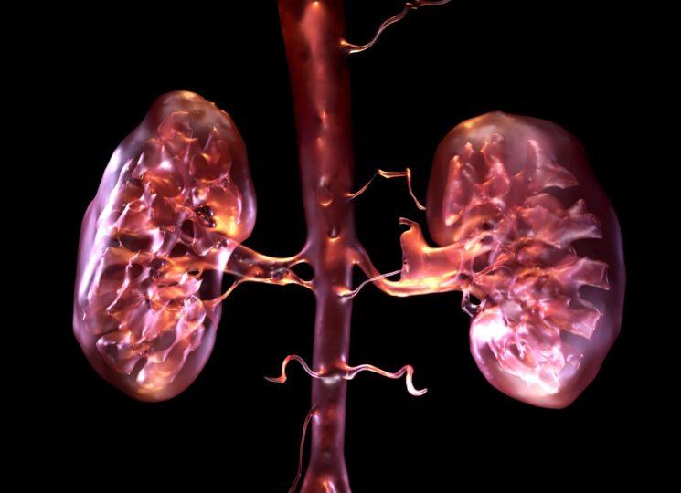 כלייה מלאכותית ביולוגית